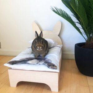 kleines Bild Kaninchenbett