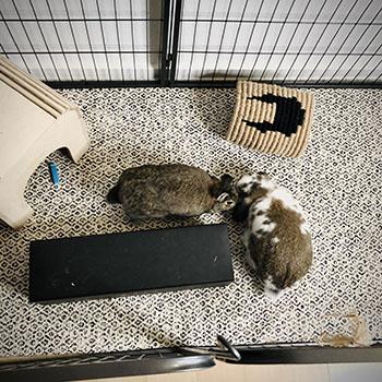 blog die Kaninchen sind hier zusammengeführt