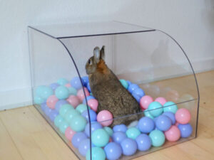 Kaninchen spielt in Bällebad