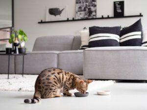 Katze isst aus Bambusschale