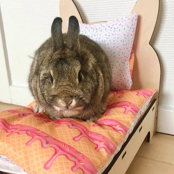 Kaninchen im Bett mit Eis