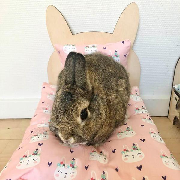 Kaninchen im Bett mit rosa Indianern