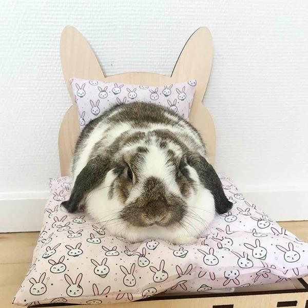 Kaninchen im Bett mit rosa Kaninchen