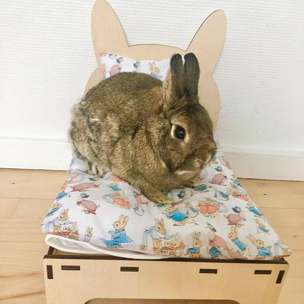 Kaninchen im Bett mit peter Kaninchen