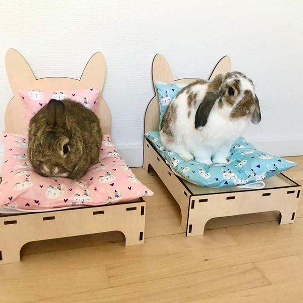 Kaninchen in zwei Betten